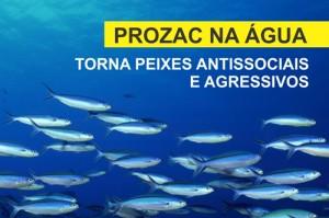 PROZAC NA ÁGUA TORNA PEIXES ANTISSOCIAIS E AGRESSIVOS